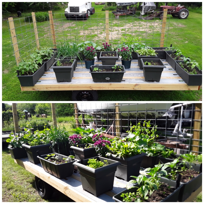 Mobile Gardening, My New Favorite Way to Garden